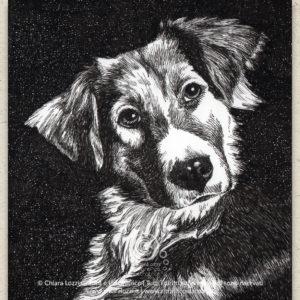 Ritratti di Cani - Meticcio