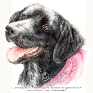 Ritratti di Cani - Cloe
