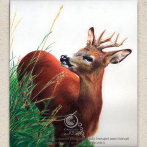 Ritratti di animali domestici e selvatici