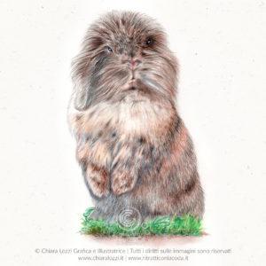 Ritratti di animali domestici e selvatici - Priscilla